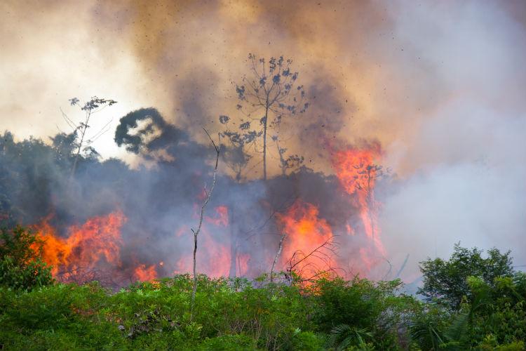 Forêt amazonienne en feu