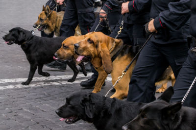 Maître-chien – gendarme en unité cynophile