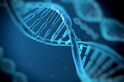 L'ADN et son utilisation